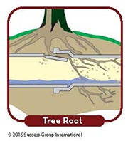 Main Drain Problem Signs: Tree Root